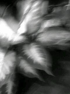 f0100480_2158476.jpg