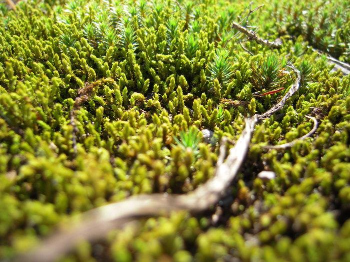 苔の森_e0146210_18162625.jpg