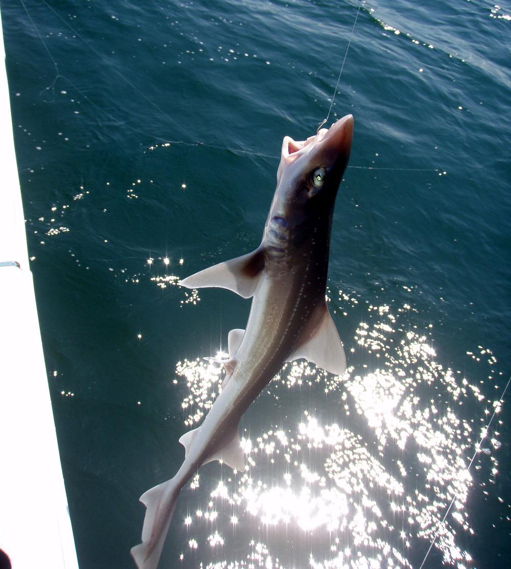 2010年9月22日(水) 知多半島 大井港より釣行_d0171823_2325447.jpg