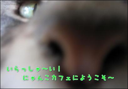 d0139352_0471195.jpg