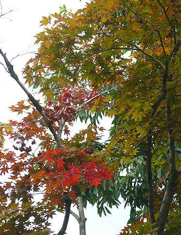 和をもって尊しとなす。。第66回日本ユネスコ運動全国大会In奈良へお出かけしてきます^^゚。*・。♬♪ †_a0053662_23405168.jpg