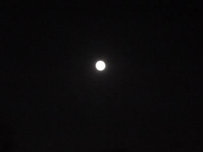 2010.9.22   中秋の月  の日 なな茶々まずい・・・_a0083571_03587.jpg