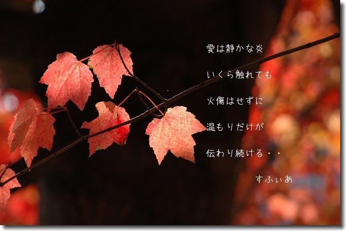 b0152416_1001759.jpg