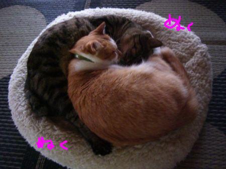 猫団子_a0099131_1332123.jpg