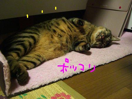 猫団子_a0099131_13321572.jpg