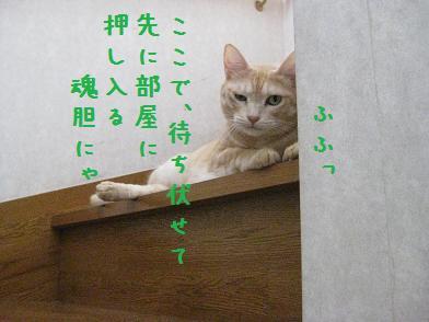b0151748_1223119.jpg