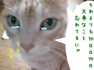 b0151748_12335988.jpg