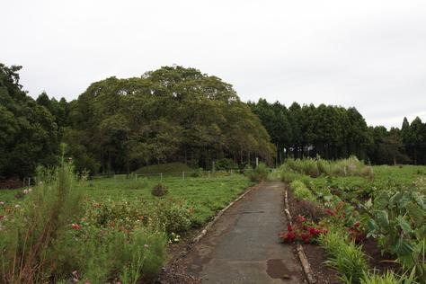 大きな桜の木_a0157159_20365149.jpg