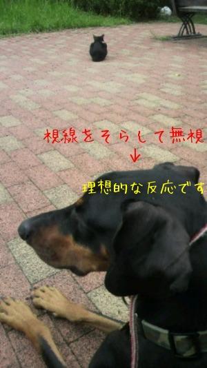 f0177261_9102722.jpg