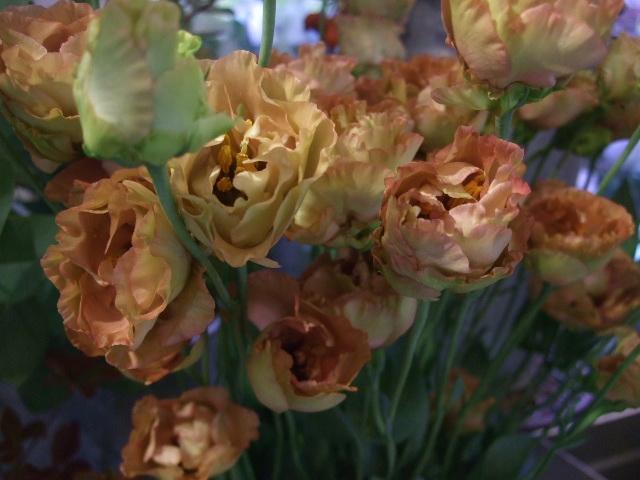 オークリーフ(秋、コスモスの花)_f0049672_1726894.jpg