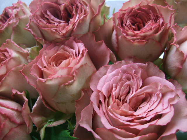 オークリーフ(秋、コスモスの花)_f0049672_17272047.jpg