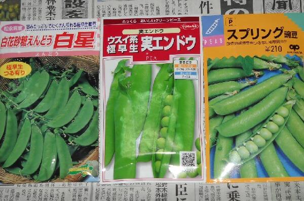 極早生豌豆3種_f0018078_16493847.jpg