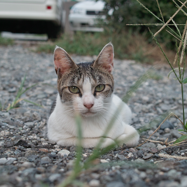 茅ヶ崎のネコちゃん。_e0139093_18241677.jpg