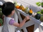 かぼちゃ売りの少女_c0102699_0235814.jpg