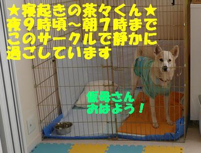 f0121712_1581661.jpg
