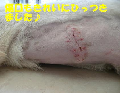 傷もきれに治っています♪_f0121712_158661.jpg