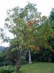 初秋の十和田湖♪_f0223914_2263664.jpg