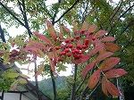 初秋の十和田湖♪_f0223914_2264668.jpg