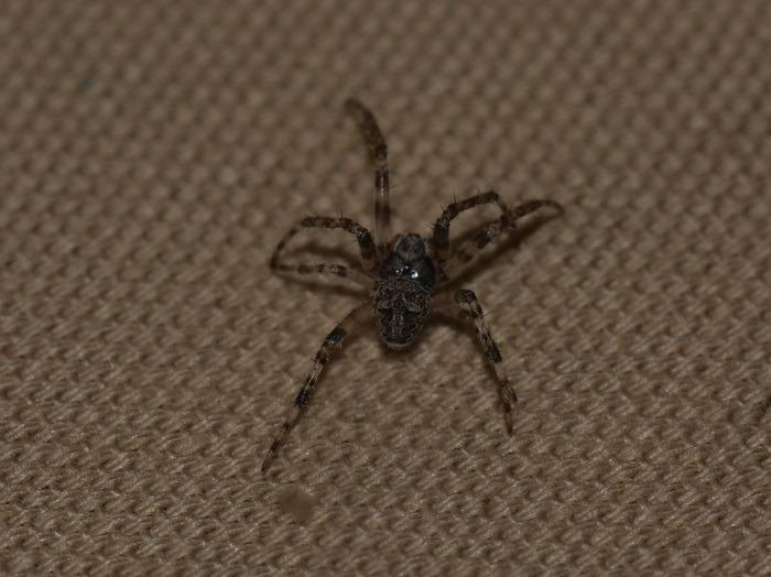 何蜘蛛?_c0116915_0185244.jpg