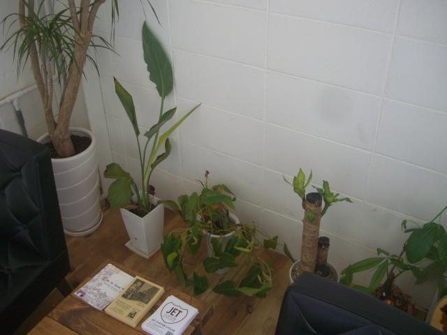 続・観葉植物_a0164918_14215087.jpg