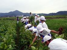 北新庄小学校3年生の子供達が枝豆収穫を体験しました_e0061225_10271727.jpg