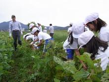 北新庄小学校3年生の子供達が枝豆収穫を体験しました_e0061225_10274915.jpg
