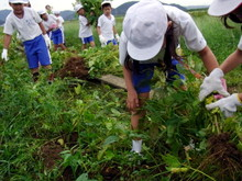 北新庄小学校3年生の子供達が枝豆収穫を体験しました_e0061225_1028147.jpg