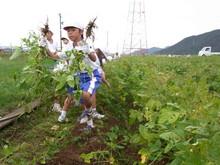 北新庄小学校3年生の子供達が枝豆収穫を体験しました_e0061225_10282020.jpg