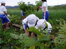 北新庄小学校3年生の子供達が枝豆収穫を体験しました_e0061225_10283670.jpg
