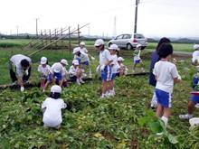 北新庄小学校3年生の子供達が枝豆収穫を体験しました_e0061225_10343270.jpg