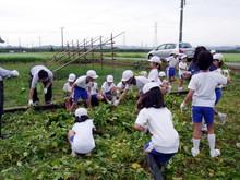 北新庄小学校3年生の子供達が枝豆収穫を体験しました_e0061225_10344143.jpg