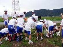 北新庄小学校3年生の子供達が枝豆収穫を体験しました_e0061225_10363454.jpg