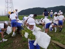 北新庄小学校3年生の子供達が枝豆収穫を体験しました_e0061225_10364580.jpg