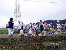 北新庄小学校3年生の子供達が枝豆収穫を体験しました_e0061225_10373849.jpg