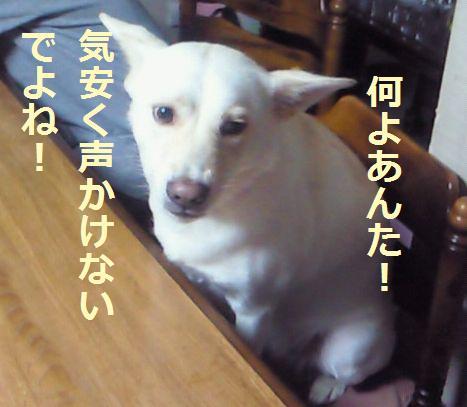 f0195543_2343113.jpg