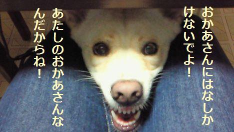 f0195543_23435965.jpg