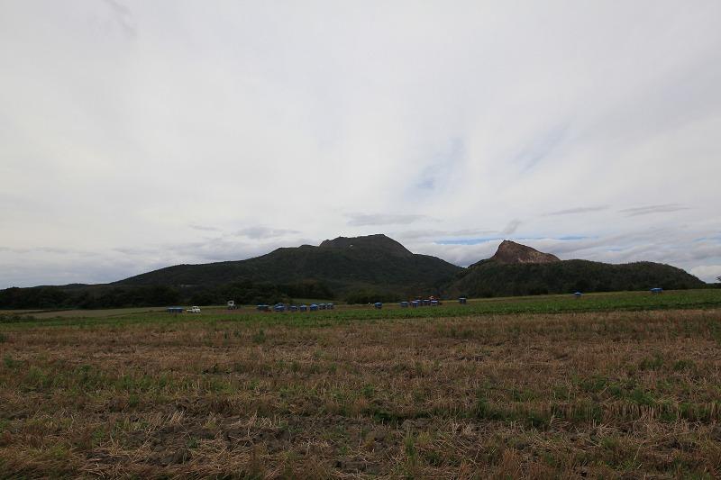 伊達 畑の隅に野生のポップを見つけた_a0160581_18541256.jpg