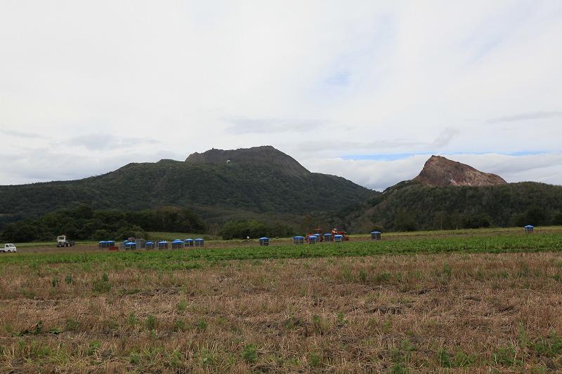 伊達 畑の隅に野生のポップを見つけた_a0160581_18542511.jpg