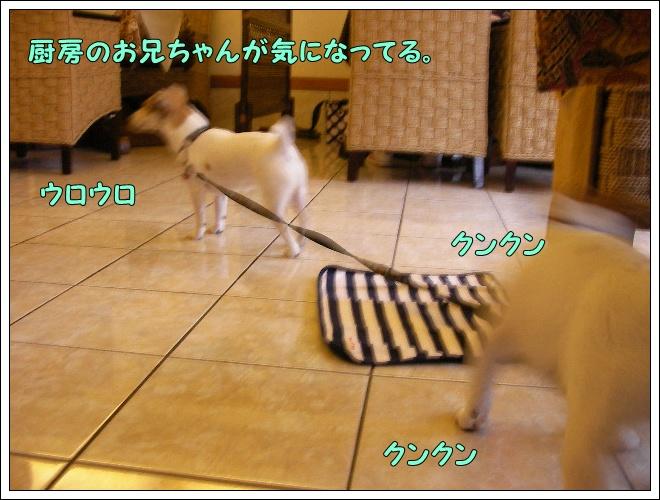 c0214384_18313747.jpg