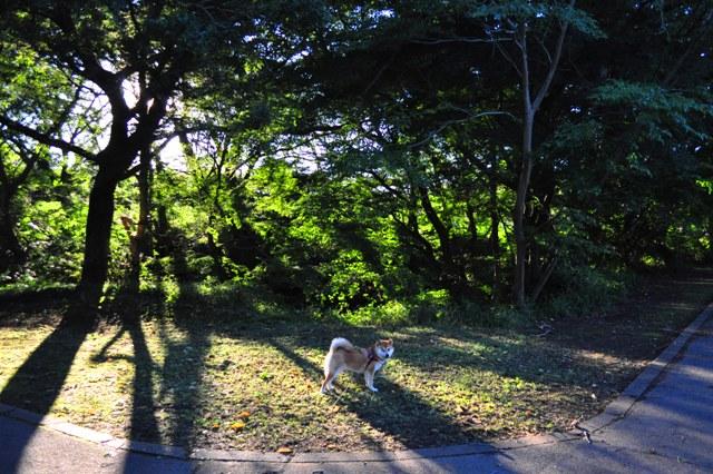 飴色のお散歩_a0126590_21464345.jpg
