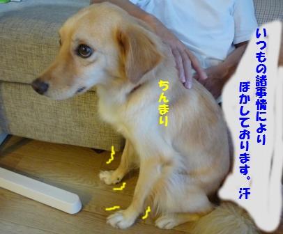 c0196992_1655060.jpg