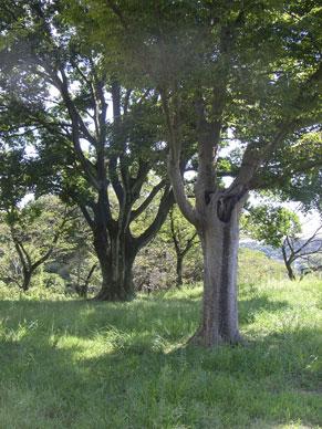 b0129807_1721538.jpg
