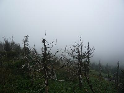 雲中模索の八幡平♪_f0223914_12161819.jpg