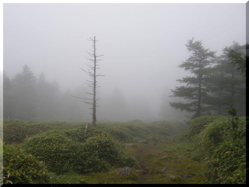八ヶ岳の旅 9/20~22 ②_f0100825_2192170.jpg