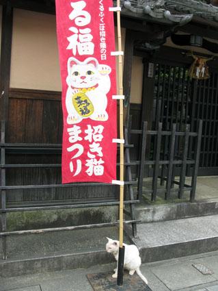 猫・ねこ・にゃんこ_f0129726_22271630.jpg