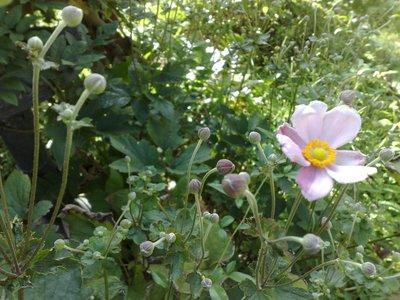今朝の庭_b0132338_9154074.jpg