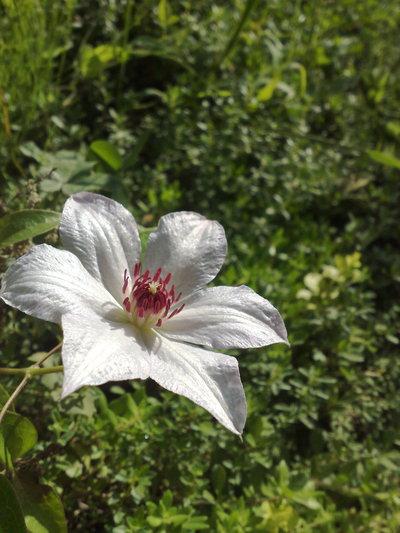 今朝の庭_b0132338_916382.jpg