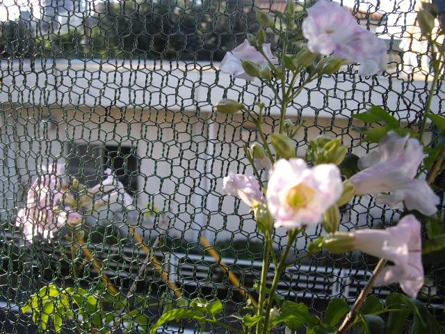 生き残りの花が元気に。_d0116059_965313.jpg