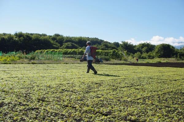 小麦2011 タネまき_c0110869_2048277.jpg
