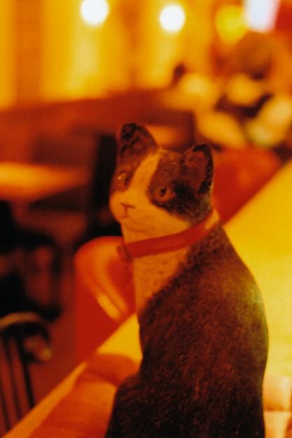 看板猫の店で_e0199776_1056923.jpg